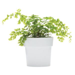 Slim Flowerpot - Oval - Integrated under-plate by Pa Design Grey
