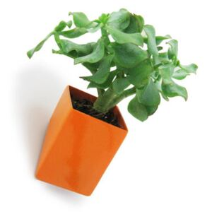 Off the wall Wall flowerpot - Small / Wall fixation - D 8 cm by Thelermont Hupton Orange
