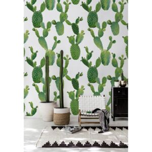 Wallpaper Hunting for Tropical Cacti