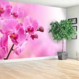 Wallpaper Pink orchid 104x70 cm