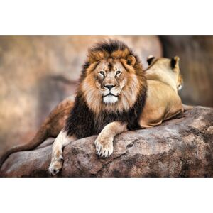 Poster Lion - King of the Pride, (91.5 x 61 cm)