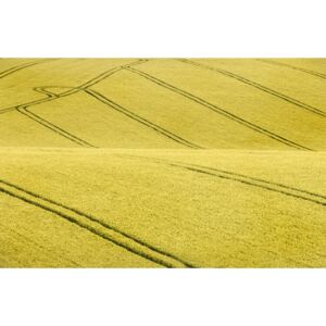 Art Photography Field #2, Clive Collie