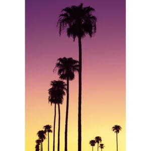 Art Photography American West - Sunset Palm Trees, Philippe Hugonnard