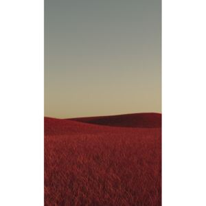 Art Photography Minimal landscpases of a red grass at with a gradient sky series 1, Javier Pardina