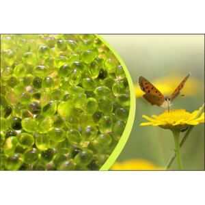 Canadian Spa Company Chamomile Aromatherapy Scent Pouch