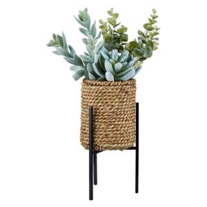 Succulent in Ratten Basket with Stand