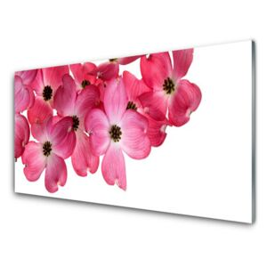 Acrylic Print Flowers floral pink white 100x50 cm