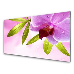 Acrylic Print Flower leaves floral pink green 100x50 cm
