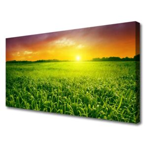 Canvas print Cereal field sunrise floral green red 100x50 cm