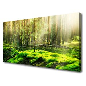 Canvas print Moss forest nature green 100x50 cm