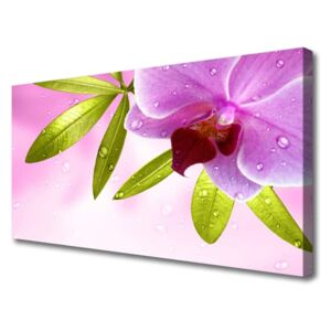 Canvas print Flower leaves floral pink green 100x50 cm