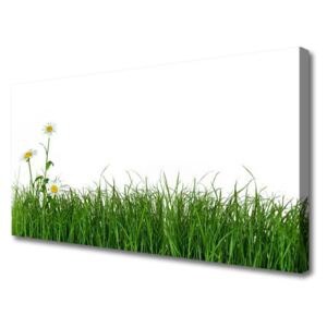 Canvas print Weed nature green 100x50 cm