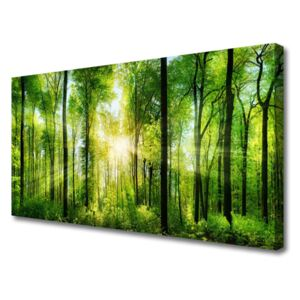 Canvas print Forest nature green brown 100x50 cm