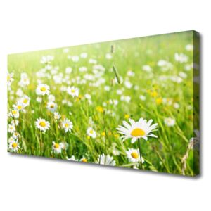 Canvas print Meadow daisies nature white yellow green 100x50 cm