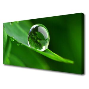 Canvas print Leaf water droplets floral green 100x50 cm
