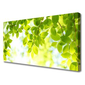 Canvas print Leaves nature green 100x50 cm