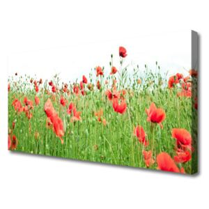 Canvas print Poppies nature red green 100x50 cm