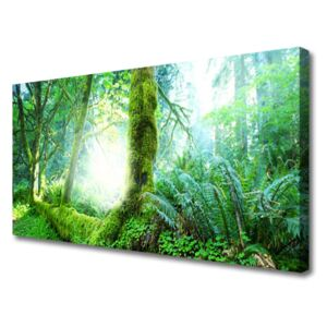 Canvas print Forest nature green 100x50 cm