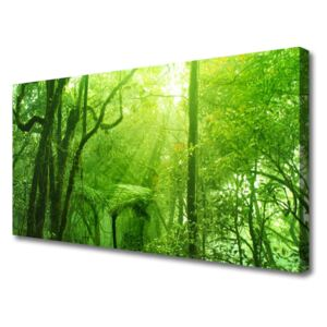 Canvas print Trees nature brown green 100x50 cm