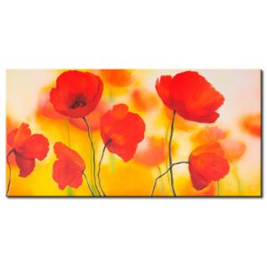 Canvas Print Poppies: Meadow of poppies
