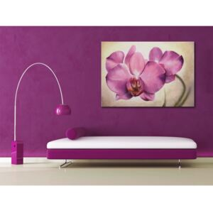 Canvas Print Orchids: Sensual orchid
