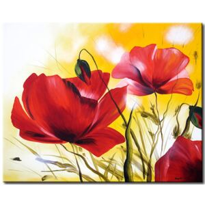 Canvas Print Poppies: Beautiful poppies