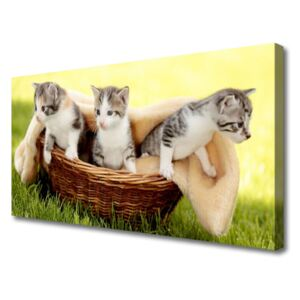 Canvas Wall art Cats animals grey white brown 100x50 cm