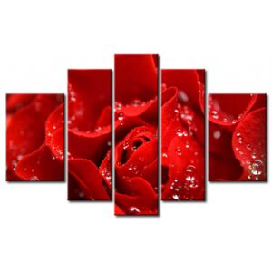 Canvas Print Roses: Kiss from a red rose