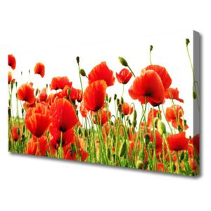 Canvas Wall art Poppies nature red green 100x50 cm