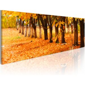 Canvas Print Forest: Golden leaves