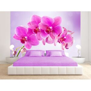 Wall mural Orchids: Thoughtfulness