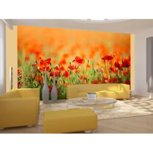 Wall mural Poppies: Poppies in shiny summer day