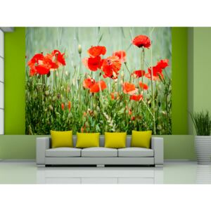 Wall mural Poppies: Field of red poppies
