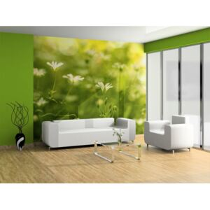 Wall mural Meadow: Nature in springtime