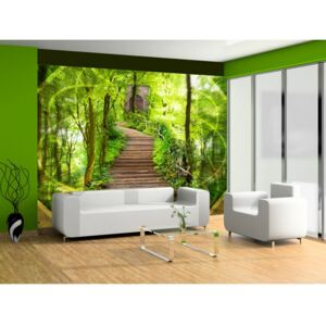 Wall mural Forest and Trees: Mystery of the forest