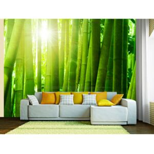 Wall mural Orient: Sun and bamboo
