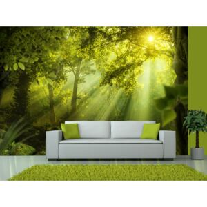 Wall mural Forest and Trees: In a Secret Forest