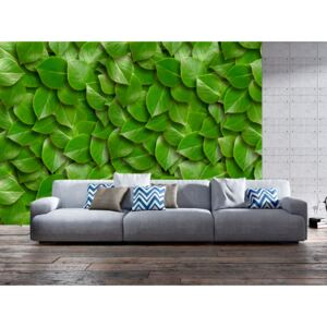 Wall mural Forest and Trees: Secret Garden