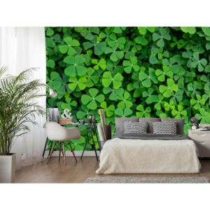 Wall mural Other Flowers: Green Clover