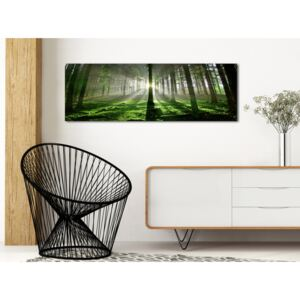 Canvas Print Forest: Emerald Forest