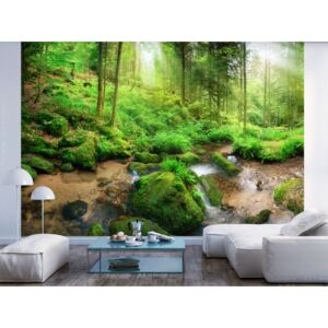 Wall mural Forest and Trees: Humid Forest