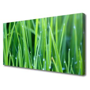Canvas Wall art Weed nature green 100x50 cm