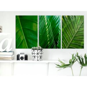 Canvas Print Trees: Leaves (Collection)