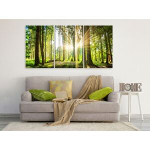 Canvas Print Forest: Daylight (3 Parts)