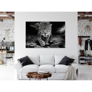 Canvas Print Cats: Green-Eyed Predator (1 Part) Wide Black and White