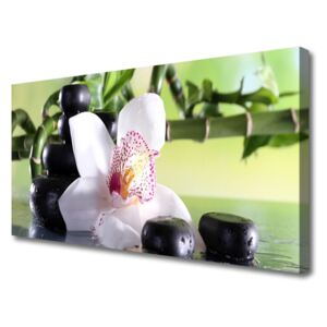Canvas Wall art Bamboo cane flower stones floral green white black 100x50 cm