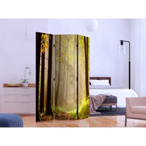 Room divider: Mysterious forest path [Room Dividers]
