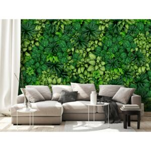 Wall mural Landscapes: Plant Wall