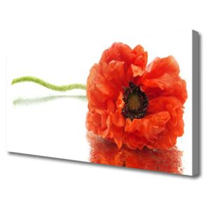 Canvas Wall art Flower floral red 100x50 cm