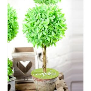 Damart Topiary Tree in a Pot